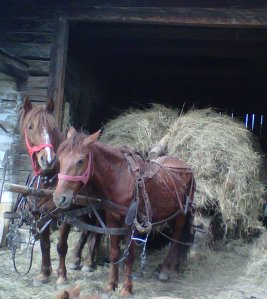 loaded up with hay
