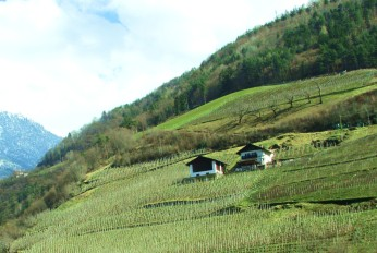 wine growing - northern italy