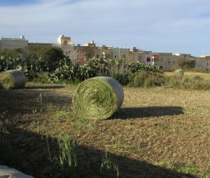 In Malta, every bit of grass is baled