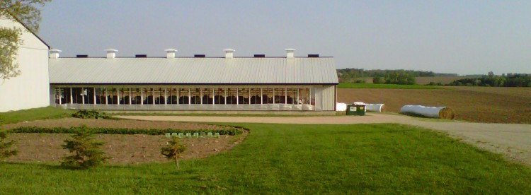 Dairy cows never leave their stalls on this farm