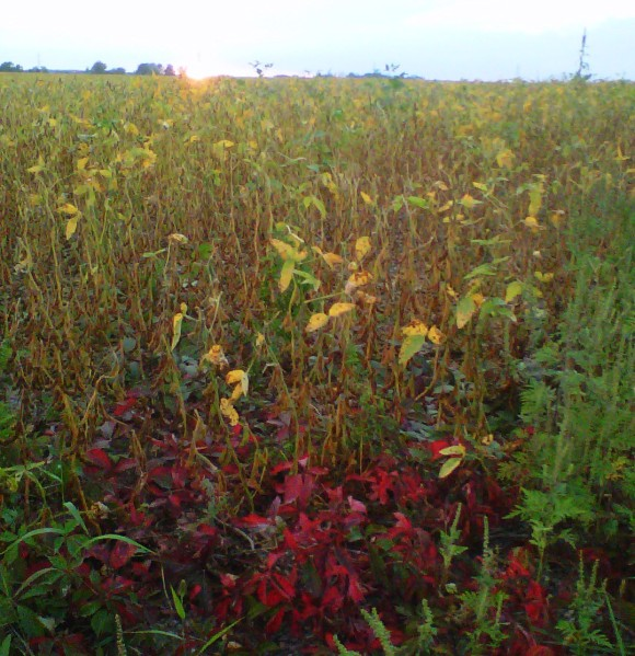 Wordeless Wednesday: Harvest Season Approaching