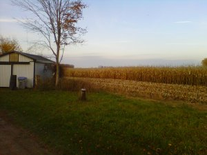Crops being harvested in the fall beside my oasis