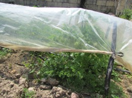 Simple vegetable growing practices in Malta