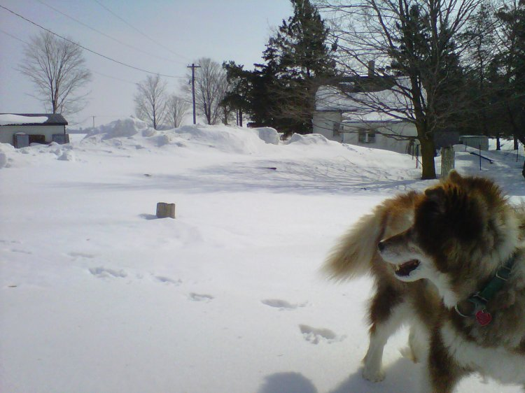 Kahlua and I looking at the amount of snow