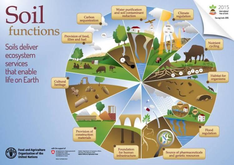 soil fao_2015
